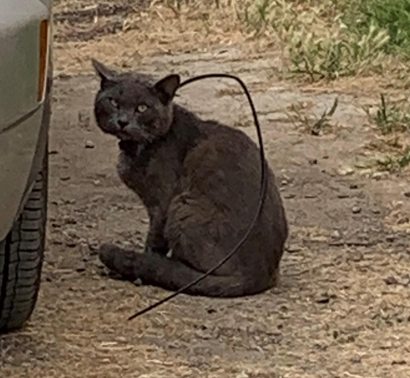 Cat With Zip Tie On Neck